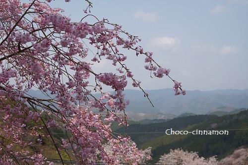 枝垂れ桜.JPG