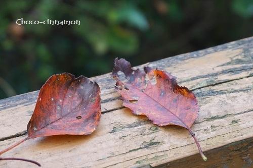 紅葉した葉っぱ.JPG